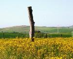 Spring 2004, a field outside Tuscania (VT) Italy